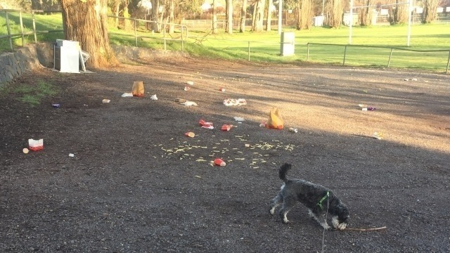 A grass & dirt area, with Vincent, Mark Kenny's Schnauzer dog in the foreground with a stick. Behind Vincent, is a large amount of litter - McDonalds food wrappers and food.